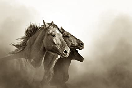 Wild mustang horses running free black white photo poster 12x18 inch
