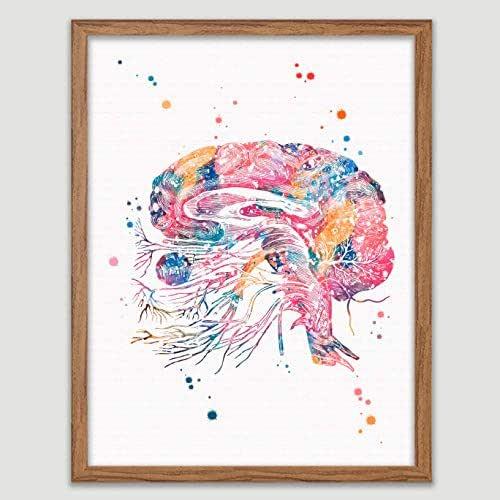 Amazon.com: Brain Cranial Nerves Watercolor Poster Neurons ...