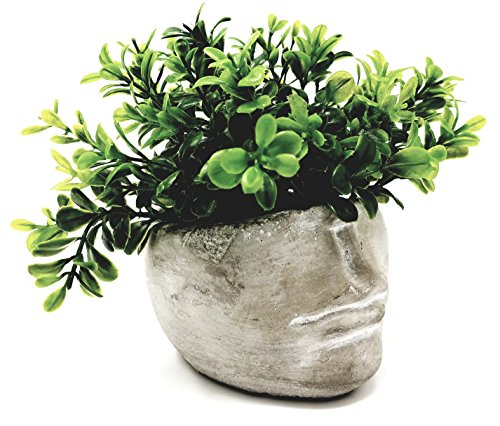 Succulent Planter 4 Inch Modern Cement Indoor Outdoor Planter Face Pot for Home or Office | Great for Succulents, Cactus, Aloe, Moss, Ferns and More (1) (Face Planter)