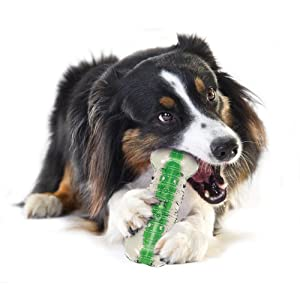 Crunching Water Bottle Durable Rubber Chew Toy For Large Dogs, Durable Chew Toy by Petstages, Large
