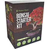 Planters' Choice Bonsai Starter Kit + Tool Kit - the Complete Kit to Easily Grow 4 Bonsai Trees from Seed with Comprehensive Guide & Bamboo Plant Markers - Unique Gift Idea