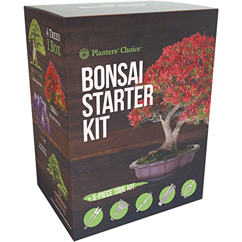 Planters' Choice Bonsai Starter Kit + Tool Kit - the Complete Kit to Easily Grow 4 Bonsai Trees from Seed with Comprehensive Guide & Bamboo Plant Markers - Unique Gift Idea by Planters' Choice
