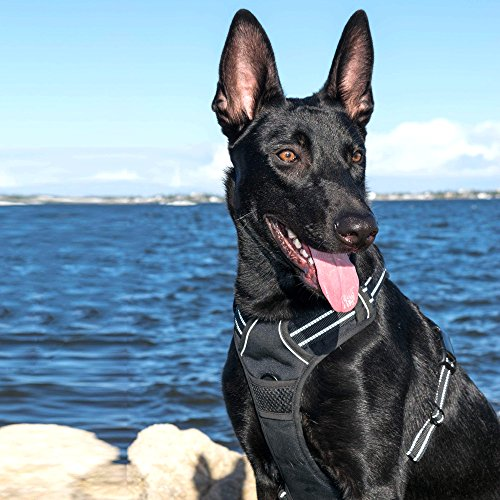 No Pull Dog Harness Best Front Range Reflective Vest with Handle and Leash Adjustable Stripe Soft Padding Easy Control for Small Medium and Large Dogs, Black L