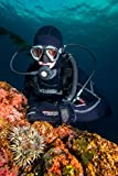 O'Neill Men's Dive J-Type 7mm Back Zip Full Wetsuit