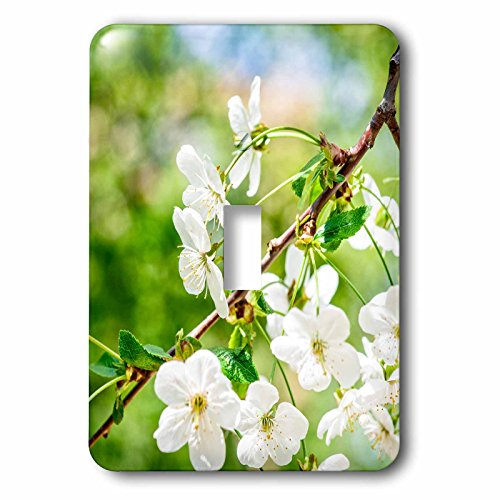 3dRose Alexis Photography - Flowers Cherry - Beautiful cheerful cherry blossoms, green, blue, beige background - Light Switch Covers - single toggle switch (lsp_271723_1) Cheerful Blossoms