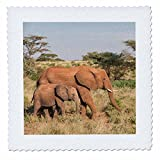 3dRose Danita Delimont - Elephants - Africa, Kenya, Samburu National Reserve. Elephants in Savannah. - 20x20 inch quilt square (qs_276452_8)