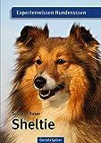 Sheltie: Expertenwissen Hunderassen