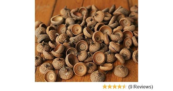 Red Oak Acorn Caps 100 Large Natural Acorn Caps Most with Stems