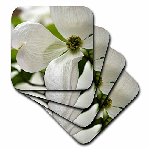 3dRose cst_51848_2 Purity-White Dogwood Flower-Spring Flowering Trees-Soft Coasters, Set of 8