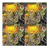 Drosanthemum flammeum - succulent - 10 seeds