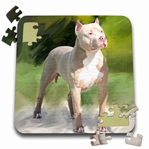 Dogs Pitbull American Terrier pzl 4241 2