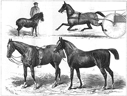 - HORSE SHOW. Blyth-Toby; Wilson-Liz Kendall; Prince Wales-Jarge; Blunt-Pharaoh - 1880 - old antique vintage print - engraving art picture prints of Horses Exhibitions - The Illustrated London News