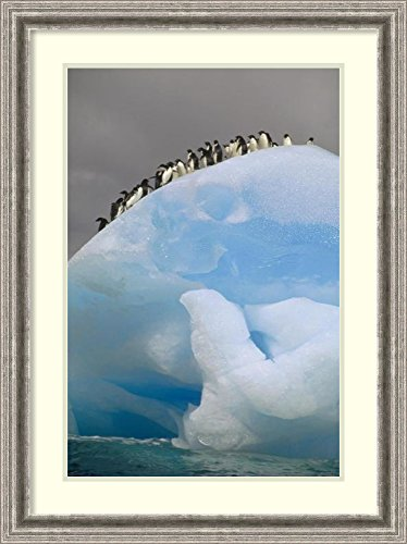 framed-art-print-adelie-penguin-group-on-iceberg-south-orkney-islands-antarctica-by-tui-de-roy