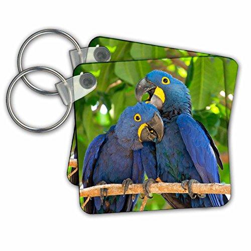 Danita Delimont - Birds - Brazil, Mato Grosso, The Pantanal. Pair of hyacinth macaws cuddling. - Key Chains - set of 2 Key Chains (kc_258346_1)