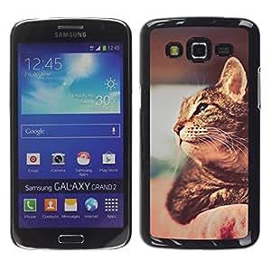 Vortex Accessory Carcasa Funda PARA SAMSUNG GALAXY GRAND 2 ( SM-G7102 / SM-G7105 ) For - Ocicat Chausie Savannah Cat Shorthair