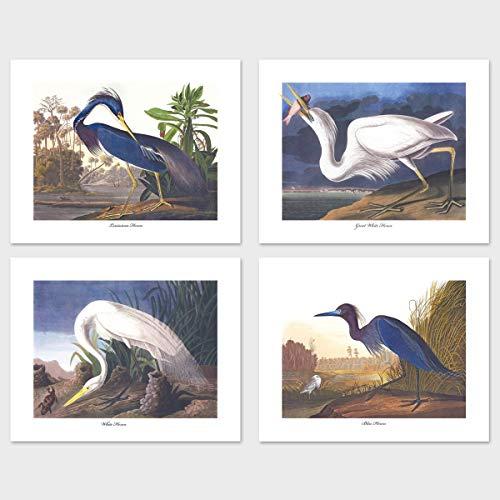 Bird Prints (Audubon Heron Art, Coastal Artwork, Blue White Home Decor) Set of 4-8x10 Unframed