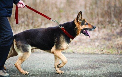 Image of Leather Martingale Dog Collar, Choker, 22