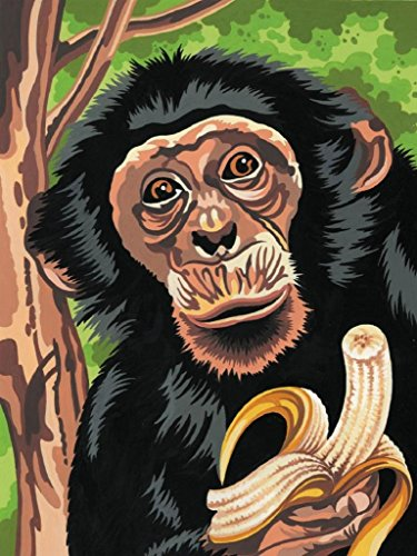 PaintingStudio Chimp eating banana DIY oil Painting by number kit Art Picture canvas 16x20 inch (Framed) Eating Framed
