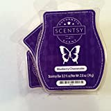Scentsy Fragrance Blueberry Cheesecake, Wickless Candle Tart Warmer'' to '' Scentsy, Blueberry Cheesecake, Wickless Candle Tart Warmer