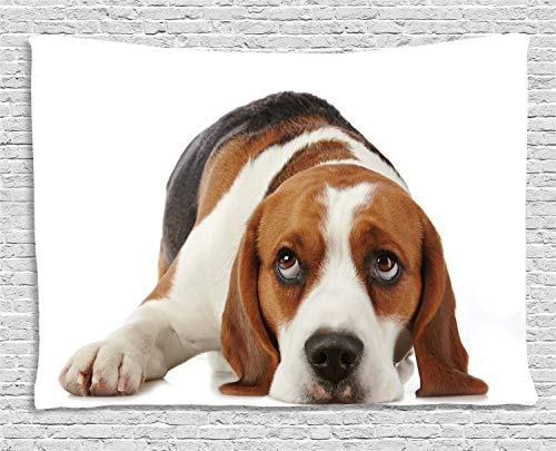 estry, Cute Adorable Dog Resting Animal Photo on White Background, Wall Hanging for Bedroom Living Room Dorm, 60 W X 40 L Inches, Pale Brown Eggshell and Dark Taupe ()
