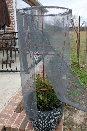 tomato-screen-plant-protector
