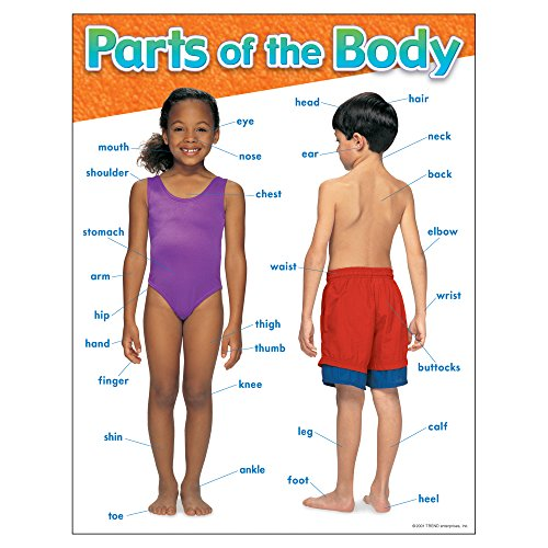 TREND enterprises, Inc. Parts of The Body Learning Chart, 17