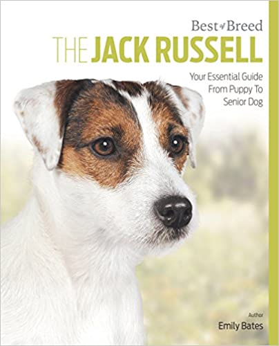 The Jack Russell Best of Breed