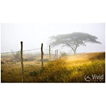 Fog Photography - chain link fence and tropical tree.