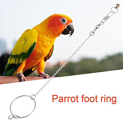 Estink Parrot Foot Ring and Chain, Stainless Steel Birds Anklet Toy Harness Leaves Training Rope(5.5mm)