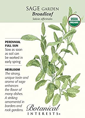 Broadleaf Sage - 30 Seeds - Organic Heirloom