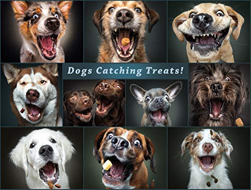 Buffalo Games - A Dog's Life - Catching The Perfect Treat - 750 Piece Jigsaw Puzzle (Games Treat Dog)