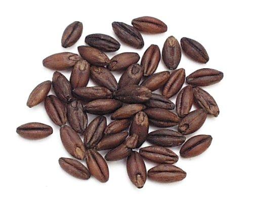 Black Barley, 10 Lb Bag - Black Barley