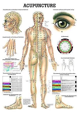 Ruediger Anatomie PO10e Acupuncture Tafel, englisch, 50 cm x 70 cm ...