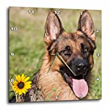 3dRose dpp_145330_3 Portrait of German Shepherd Dog Us32 Zmu0080 Zandria Muench Beraldo Wall Clock, 15 by 15-Inch Review
