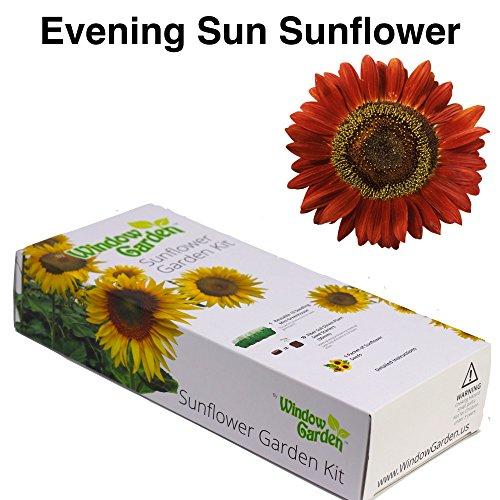 Garden Starter Kit (Evening Sun Sunflower) – Grow sun flower seed in a mini greenhouse, then plant a beautiful patch of Sunflowers in your backyard. It's easy, fun, and a - Beautiful Garden Flower