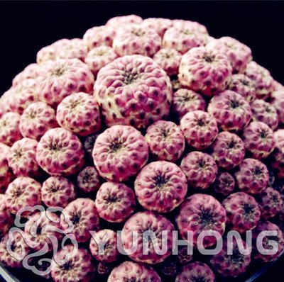 WANCHEN New Fresh Seeds Cactus Flowers 100pcs Cactus Plant Seed Rare Plant Seeds Foliage Magical Garden & Home Semillas Flora
