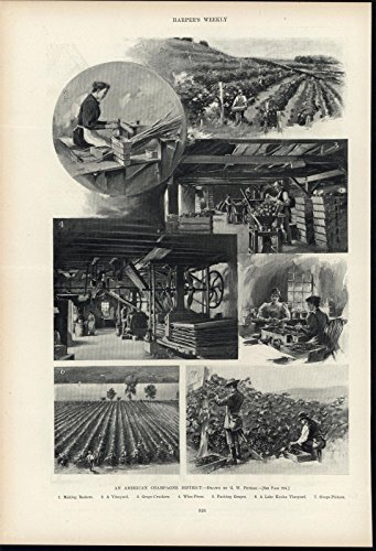 American Champagne District Vineyard New York Wine c.1900 antique historic print