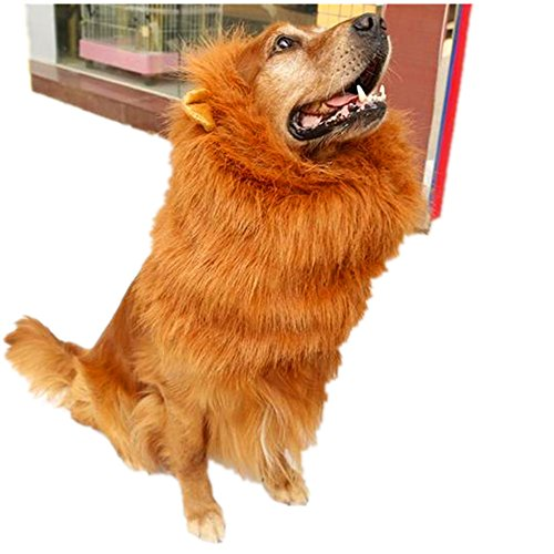 Xbes  (Dog Costumes Lion King)