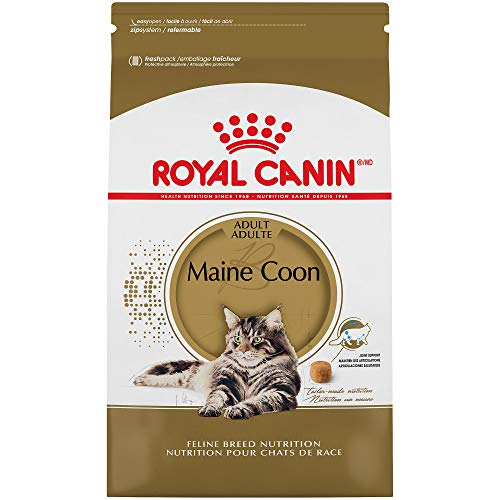 Royal Canin Maine Coon Formula Dry Cat Food (6 lb) (Best Cat Food Brands For Maine Coons)