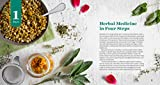 Herbal Medicine for Beginners: Your Guide to