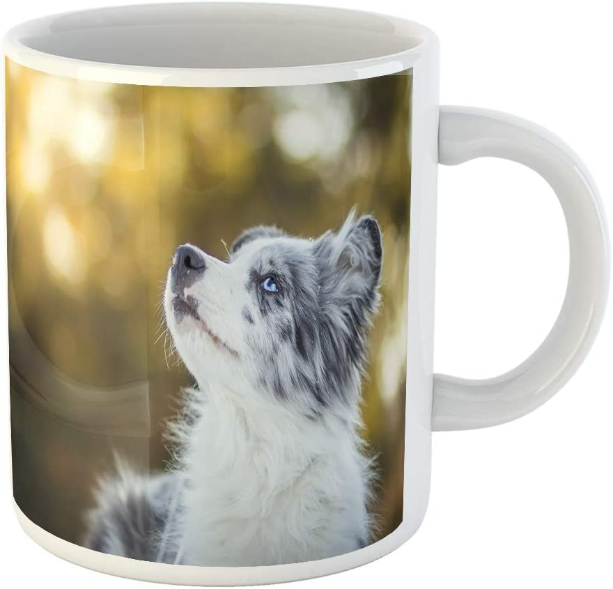 Semtomn Funny Coffee Mug Adorable Cute Blue Merle Border Collie Puppy Laying 11 Oz Ceramic Coffee Mugs Tea Cup Best Gift Or Souvenir Coffee Cups Mugs Amazon Com