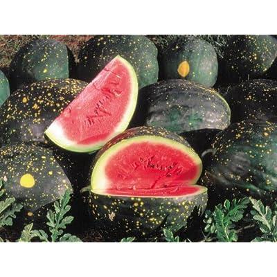 "(FW)~""Moon & Stars"" Watermelon~Seeds!!!!~Lovely Heirloom! : Watermelon Plants : Garden & Outdoor"