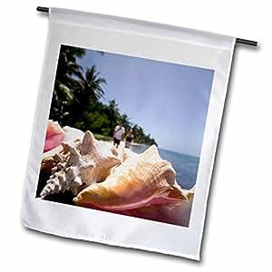 Danita Delimont - Belize - Conch Shells, Half Moon Caye, Belize - SA02 SWS0020 - Stuart Westmorland - 18 x 27 inch Garden Flag (fl_85639_2)