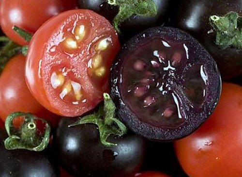indigo rose tomato 20 seeds the darkest tomato in the. Black Bedroom Furniture Sets. Home Design Ideas