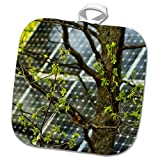 3dRose Alexis Photography - Objects - Oak Tree with Fresh Leaves, Solar Power Panel in The Background - 8x8 Potholder (PHL_290827_1)