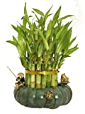 "KL Design & Import - 3 Tier 4"" 6"" 8"" Top Quality Lucky Bamboo Arrangement in a Hand Made Ceramic Fisherman and Frogs Vase"