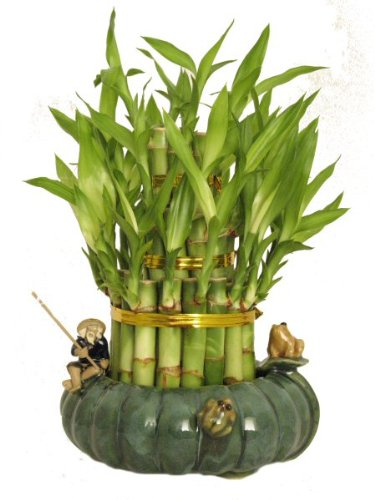 KL Design  Import – 3 Tier 4 6 8 Top Quality Lucky Bamboo Arrangement in a Hand Made Ceramic Fisherman and Frogs Vase