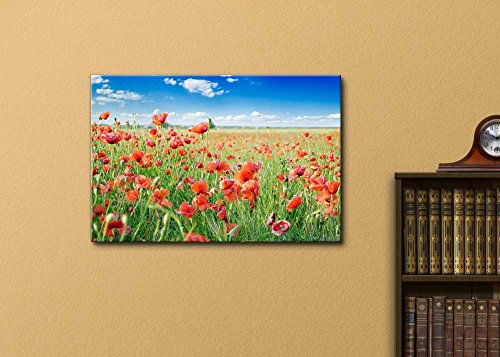 Red Poppies on Green Field Under Blue Sky
