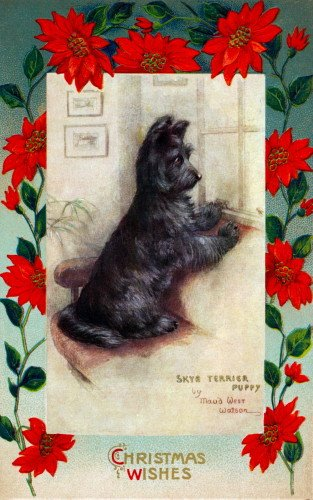 c1900 Christmas Poinsettia Border~Maud West Watson~Skye Terrier Puppy Dog Watches & Waits~6 pack NEW Matte Vintage Picture Large Blank Note Cards with Envelopes