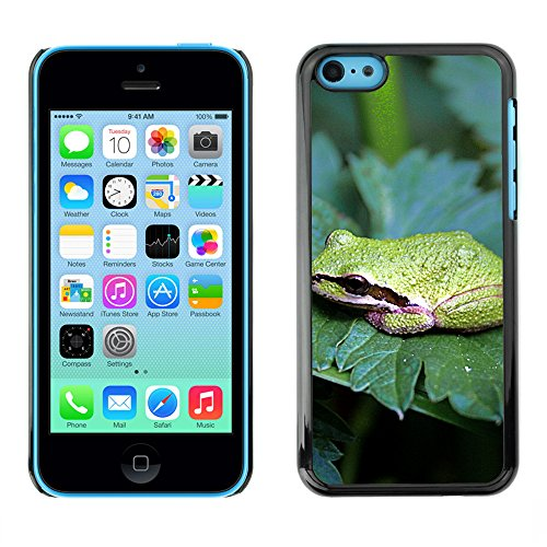 Premio Sottile Slim Cassa Custodia Case Cover Shell // F00031847 grenouille Amphibian // Apple iPhone 5C
